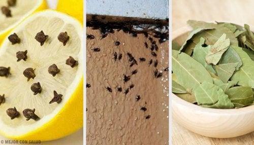 Como eliminar os insetos de forma natural