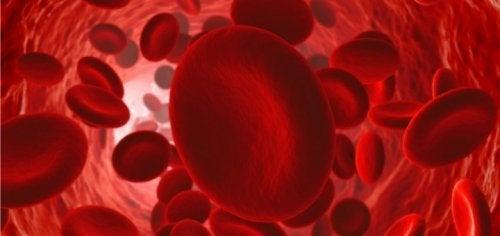 Como manter um bom fluxo de circulação sanguínea?