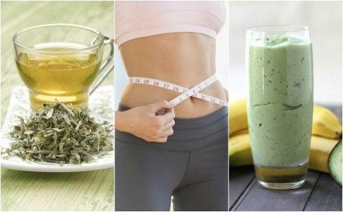 3 bebidas com chá verde para perder peso