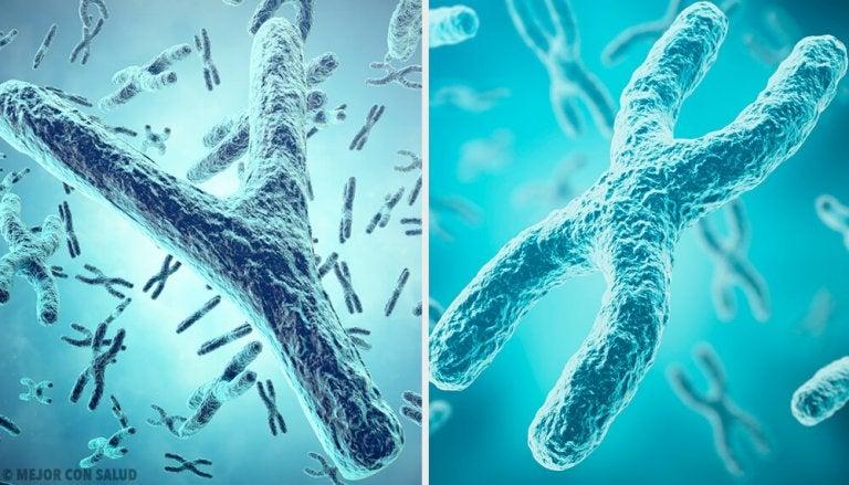 Origem genética do sexo: os cromossomos sexuais X e Y