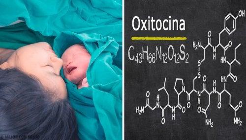 Oxitocina, o hormônio do amor