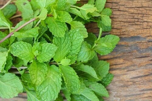 As propriedades e usos da hortelã podem ser obtidas a partir da planta