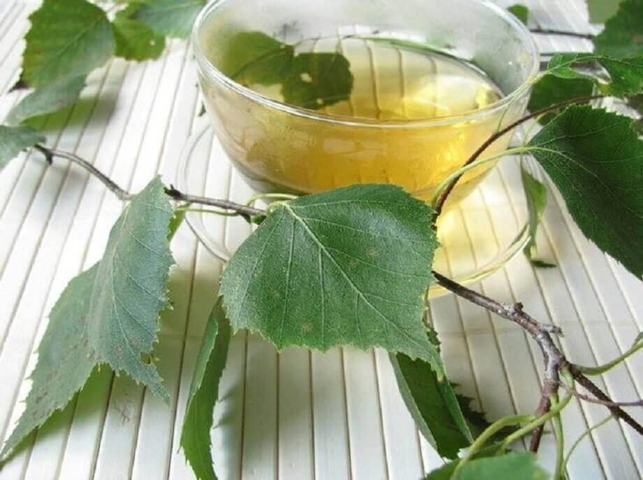 Chá de bétula-branca para aliviar problemas na bexiga
