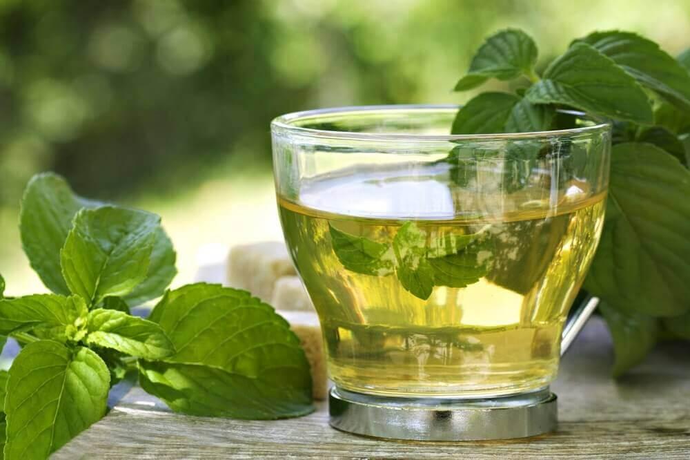 Chá de menta e urtiga