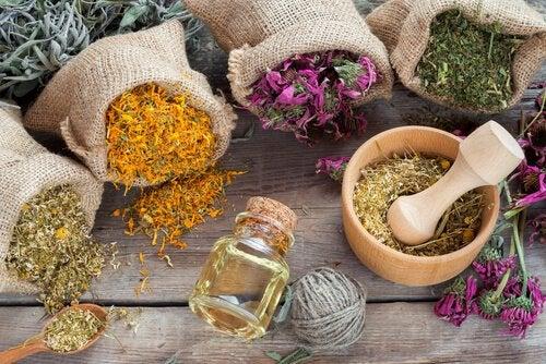 Ervas que contribuem para que o ácido hialurônico faça efeito