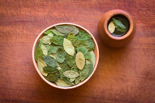 Chá de folha de coca: benefícios surpreendentes para a saúde