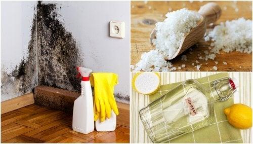 5 formas de se livrar da umidade da casa
