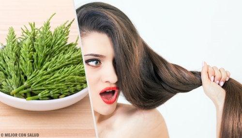 Como usar a cavalinha para o crescimento do cabelo