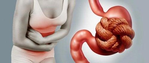 consumir ameixas secas ajuda a aliviar a prisão de ventre