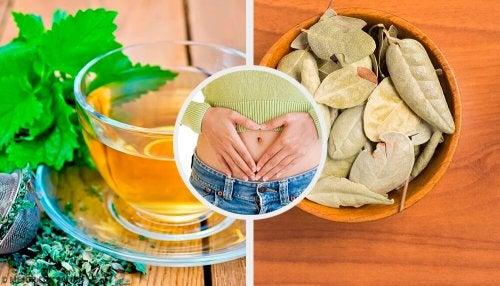 5 ervas que ajudam a melhorar os problemas digestivos