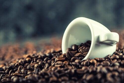 Caféem grão