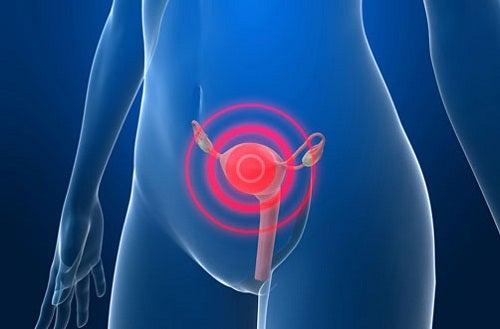Papanicolau é um estudo do útero e dos ovários