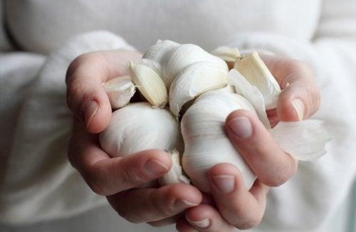 Mãos segurando cabeças de alho