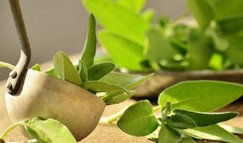 Folhas e sálvia ajudam a aliviar a dor no calcanhar
