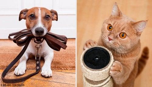 Qual animal de estimação é mais benéfico para a nossa saúde?