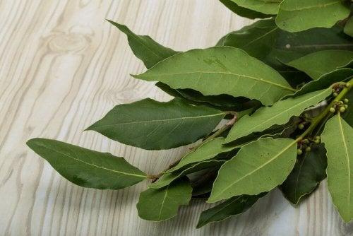 Folhas de louro para reduzir centímetros da cintura
