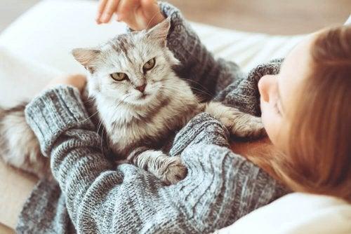 O gato pode ser o animal de estimação mais benéfico