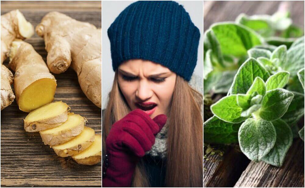 5 remédios à base de plantas que ajudam a expulsar o muco