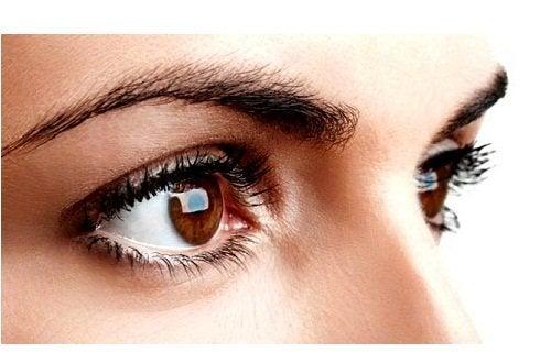 Olhos e sobrancelhas de mulher