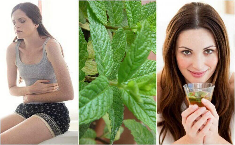 5 remédios caseiros com hortelã que você vai gostar de conhecer
