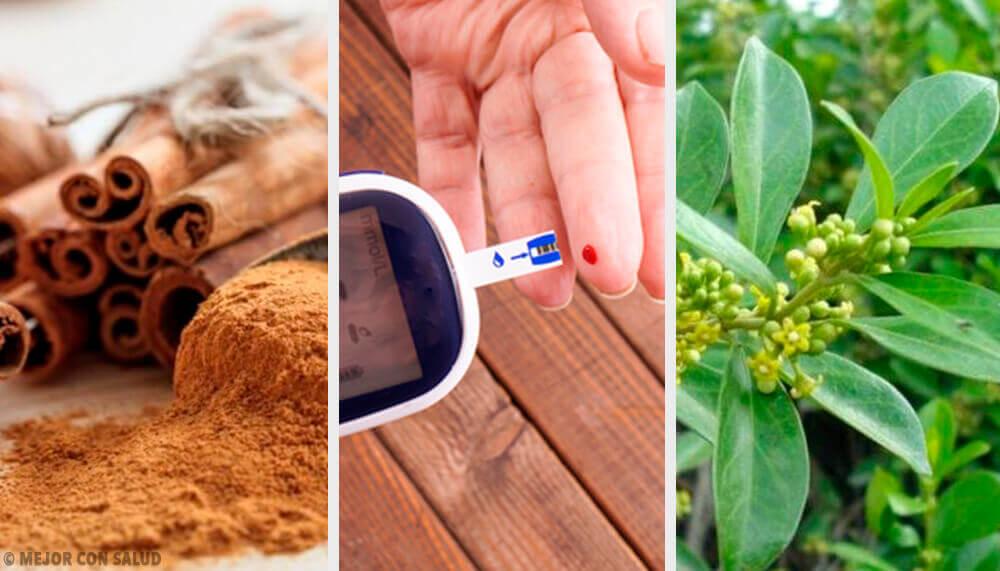 5 plantas medicinais que ajudam a controlar a diabetes