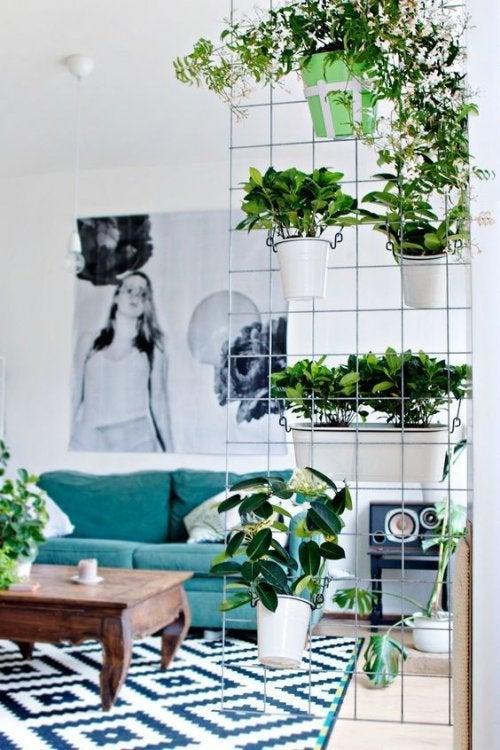 Separador com plantas