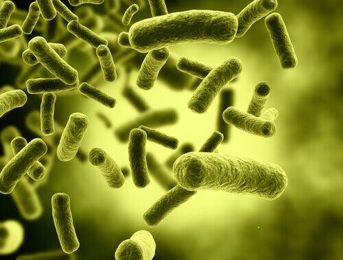 Bactérias da gastroenterite