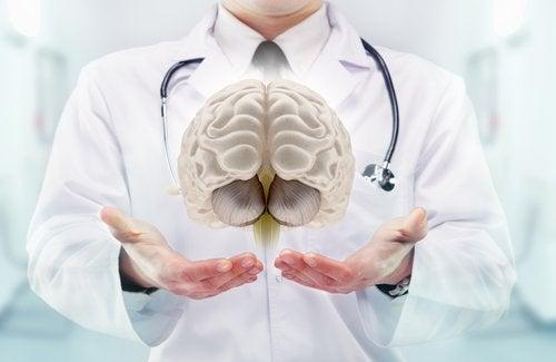 Informações sobre o cérebro