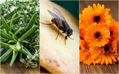 Como repelir as moscas da sua casa com 6 remédios caseiros
