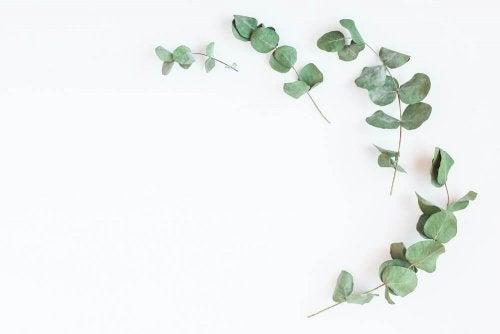 A planta de eucalipto ajuda a controlar a diabetes