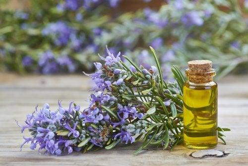 Benefícios do óleo de alecrim