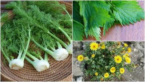 8 plantas que você não sabia que eram comestíveis