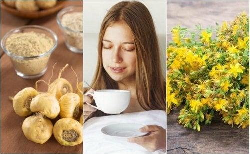 5 plantas medicinais que ajudam a aumentar o desejo sexual