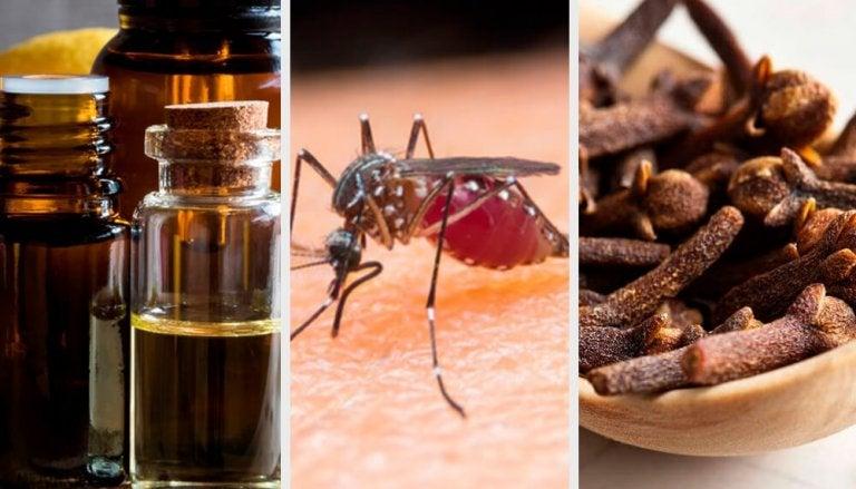 10 aromas que combatem os mosquitos
