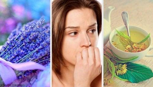 Os 5 melhores ansiolíticos naturais para acalmar a ansiedade