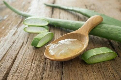 Aloe vera  pode curar terçol