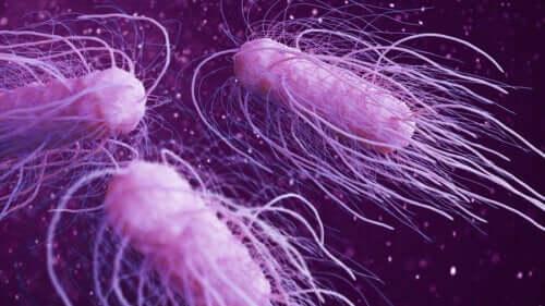 9 bactérias perigosas mais prejudiciais para o ser humano