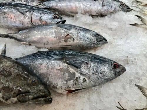 Peixe em mau estado: como identificar?