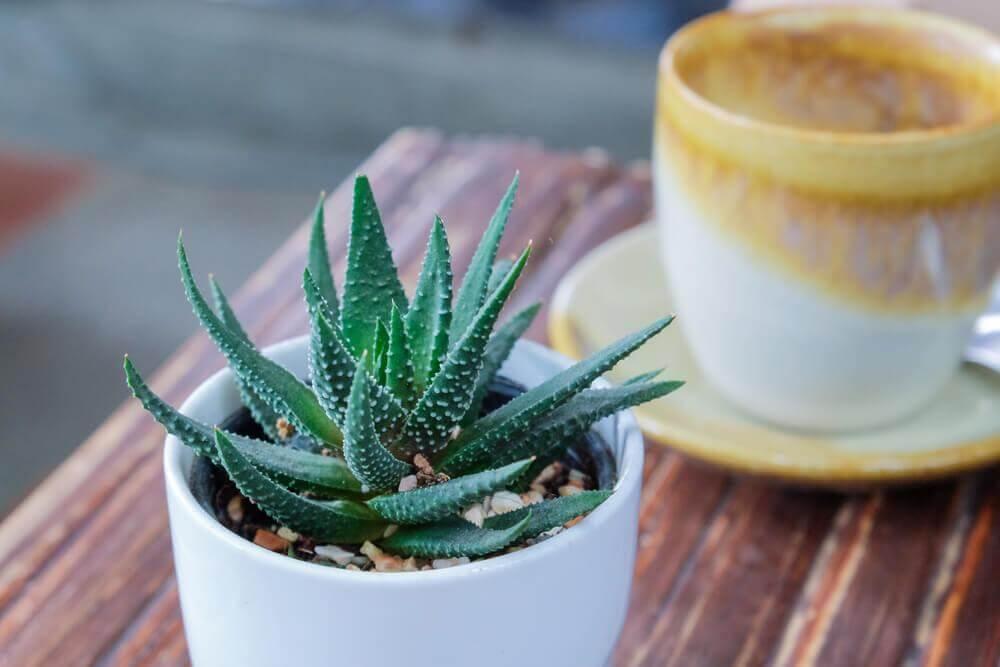 Plantas ideais para ter em casa