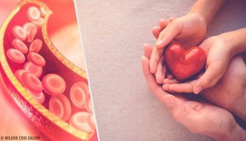 Tudo que o precisa saber sobre o colesterol
