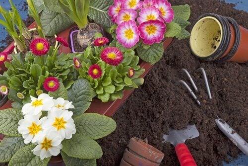 10 plantas que você pode facilmente cultivar em seu jardim