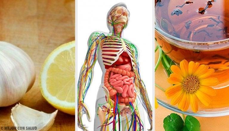 Desintoxicar o sistema linfático: remédios naturais