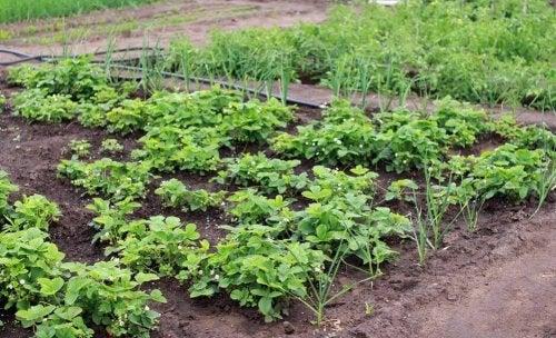 Horta caseira feita em um jardim