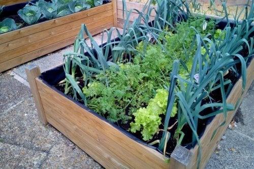 Horta caseira feita em uma gaveta de madeira