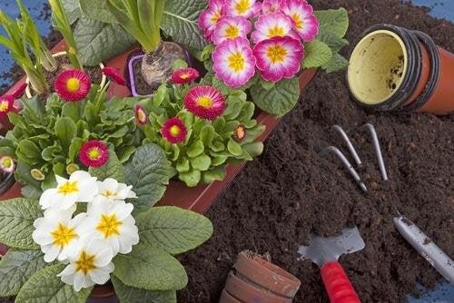 Pode cultivar em seu jardim plantas com flores