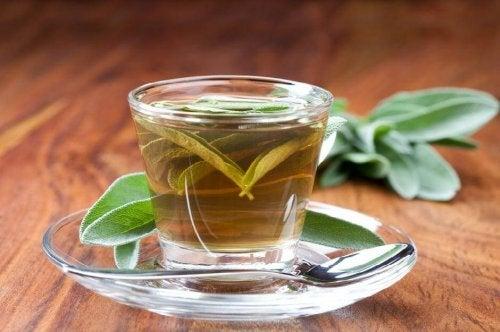 Chá de sálvia ajuda a tratar a dor de garganta