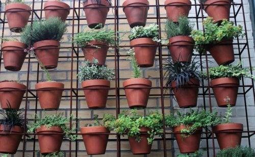 Horta caseira feita em vasos pendurados