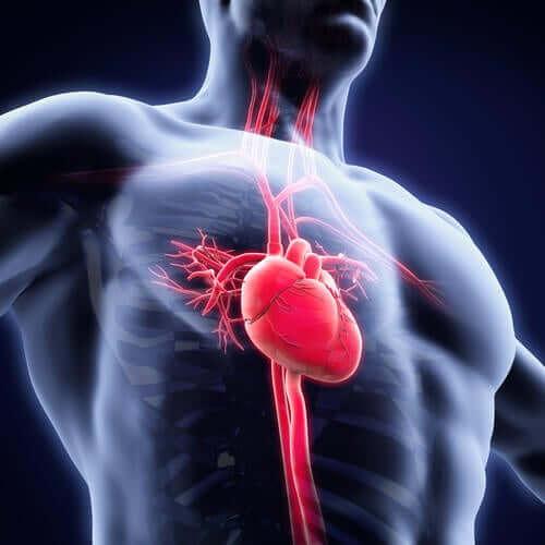 Ajuda a cuidar da saúde cardiovascular