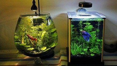 A melhor maneira de limpar o aquário