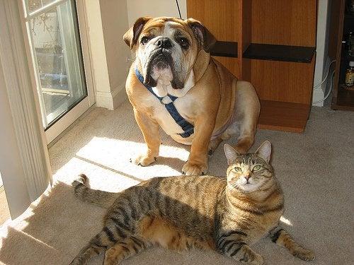 Animais de estimação na sala de casa